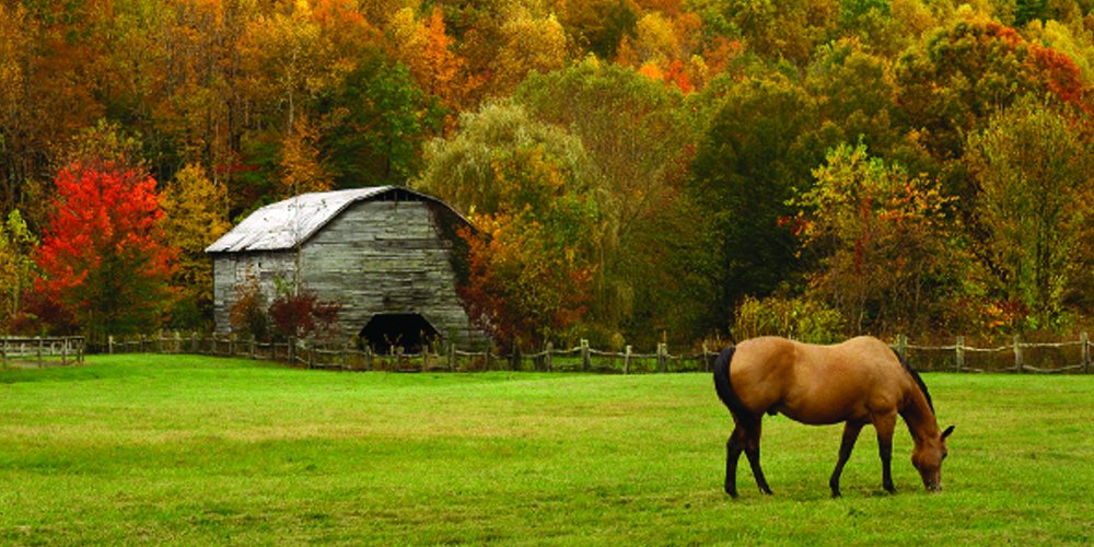 Nature's Seed 1.5 Acre Great Lakes/New England Horse Pasture Blend by Nature's Seed (Image #1)
