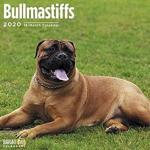 2020 Bullmastiffs Wall Calendar by Bright Day, 16 Month 12 x 12 Inch, Cute Dogs Puppy Animals Large Bull Mastiff
