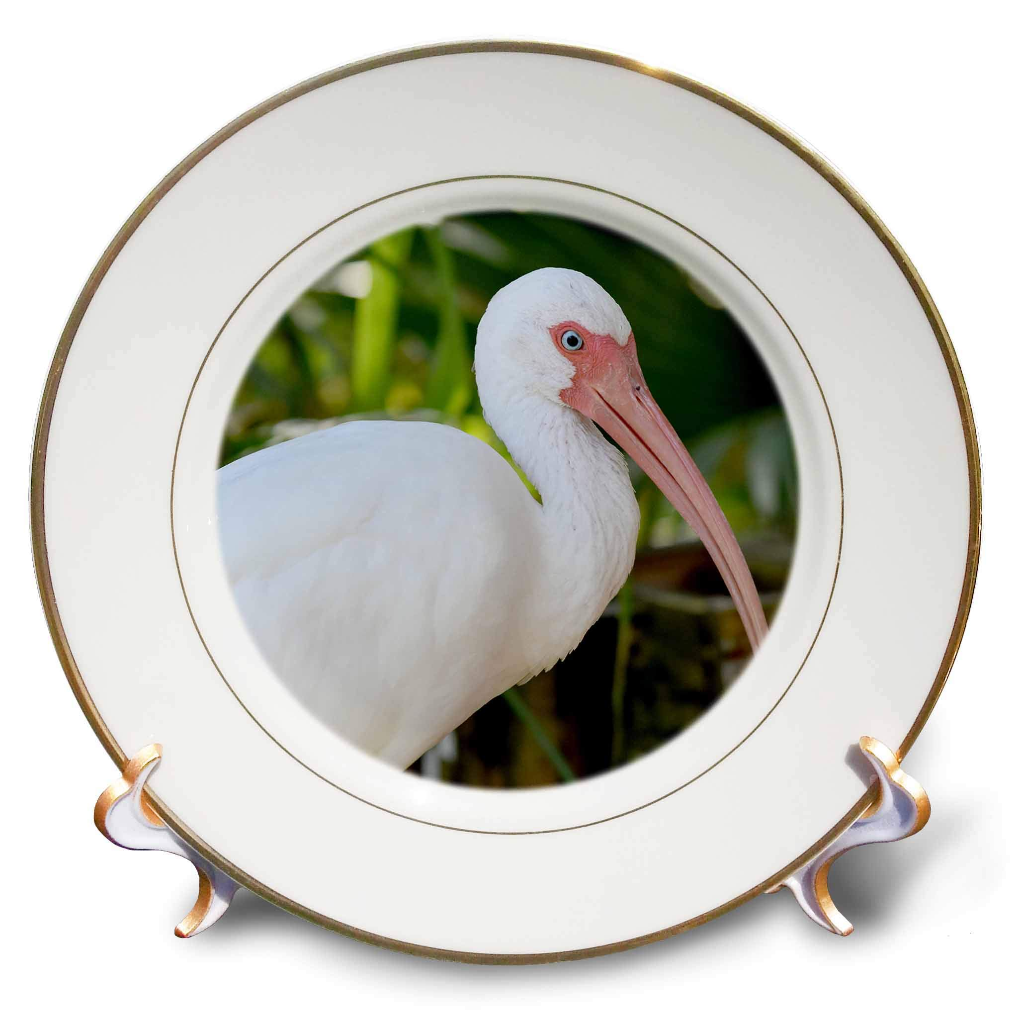 3dRose Susans Zoo Crew Animal - Ibis Bird Looking Right - 8 inch Porcelain Plate (cp_294898_1)