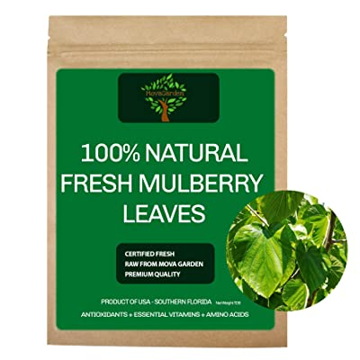 Fresh Mulberry Leaves, 20 Raw Fresh Leaves Worm, Shrimp Organic - Product of USA : Garden & Outdoor
