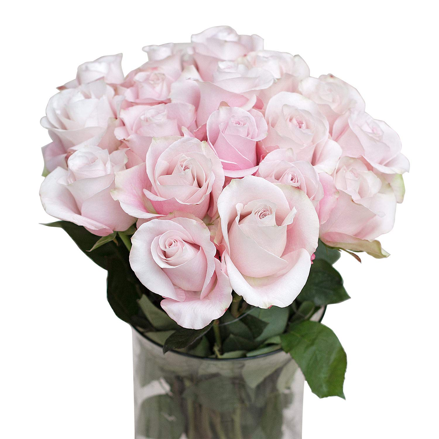 Green Choice Flowers - 24 ( 2 Dozen ) Premium Pink Fresh Roses with 20 inch Long Stem Farm Fresh Flowers Beautiful Light Pink Rose Flower Cut Per Order Direct from Farm Free Fast Delivery Long Lasting by Greenchoiceflowers (Image #1)