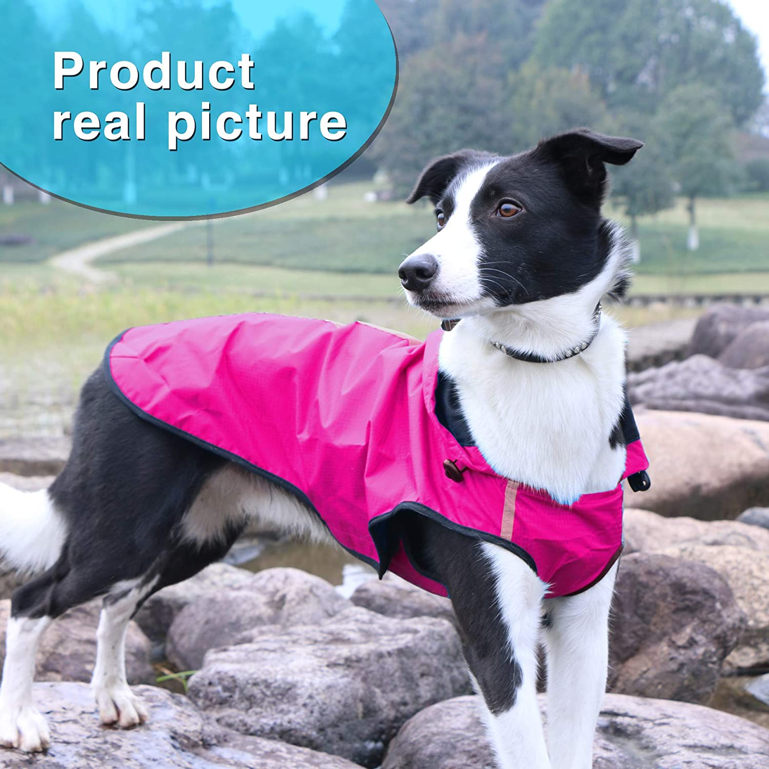 Kamots Beauty Dog Waterproof Raincoat Lightweight Packable Jacket with Reflective Stripes for High Visibility Safety/— Adjustable Hood Poncho for Small Medium Large Dogs