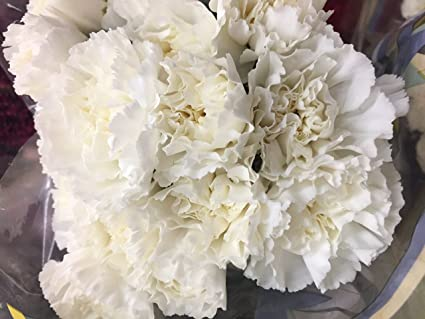 amazon com cut flowers white carnation garden outdoor