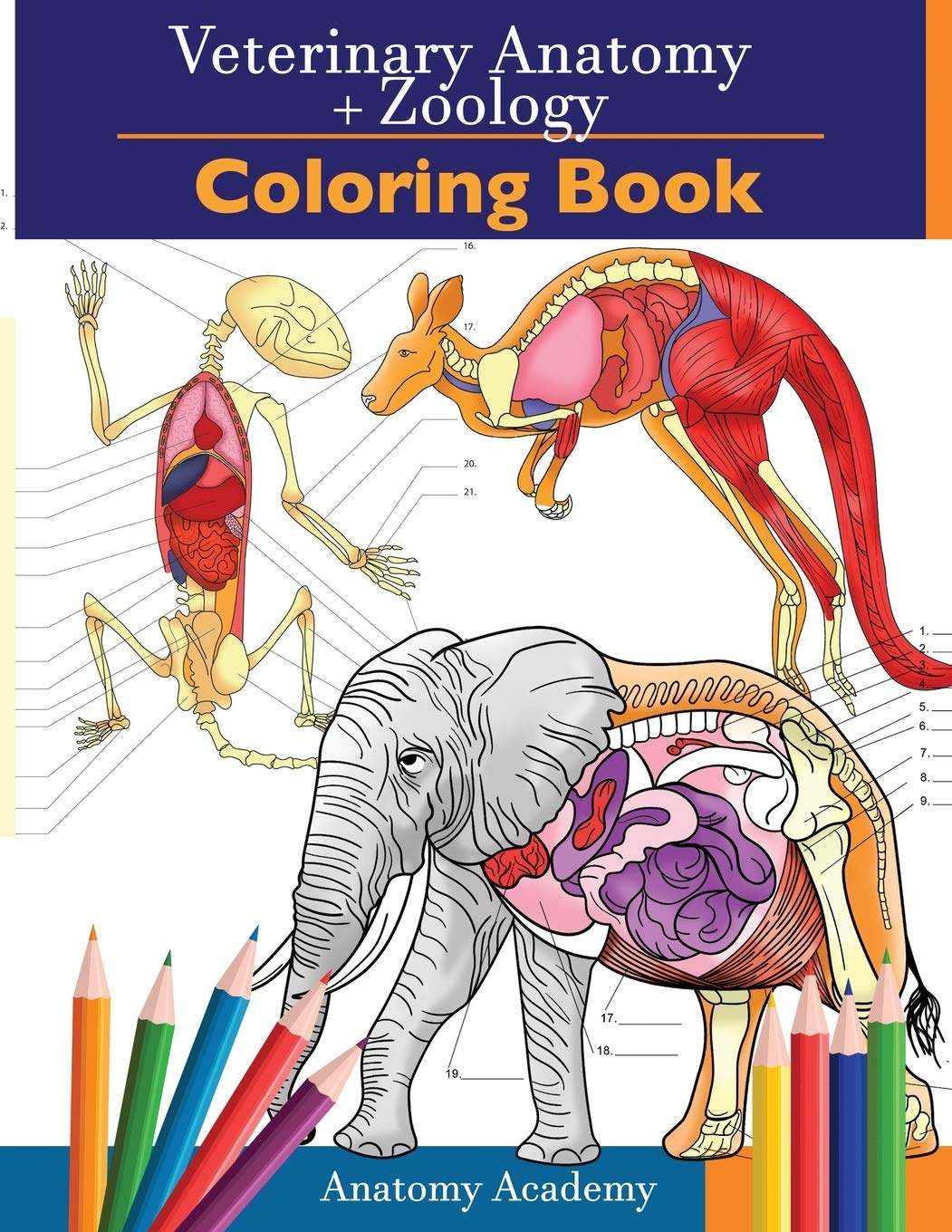 Amazon Com Veterinary Zoology Coloring Book 2 In 1 Compilation Incredibly Detailed Self Test Animal Anatomy Color Workbook Perfect Gift For Vet Students And Animal Lovers 9781914207105 Academy Anatomy Books