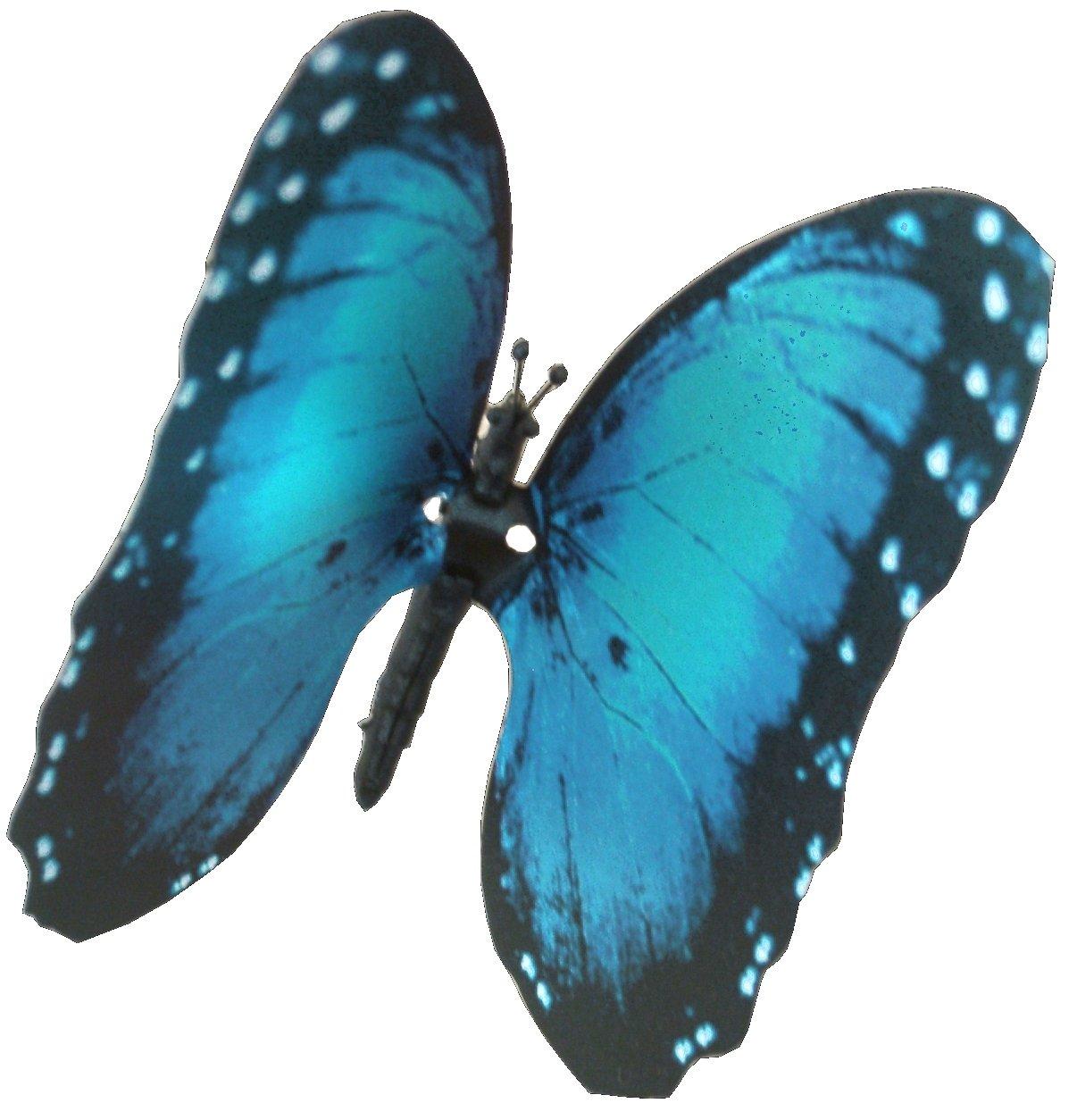 Amazon.com: Elegant Aliforms Blue Morpho - (Morpho Hyacinghus ...