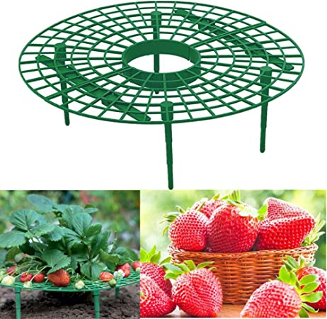 5x Strawberry Plant Growing Supports Keep Strawberries Off Rot in the Rainy Days