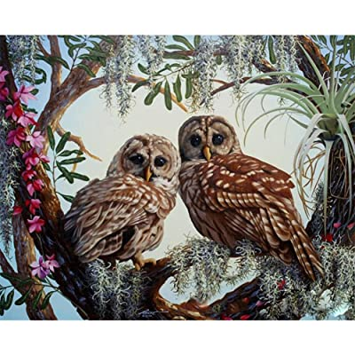 DIY Oil Painting Paint by Numbers Kit with Brushes Paint for Adults Kids Beginner Hand Paintwork Owl 16x20 inch(No Framed): Toys & Games