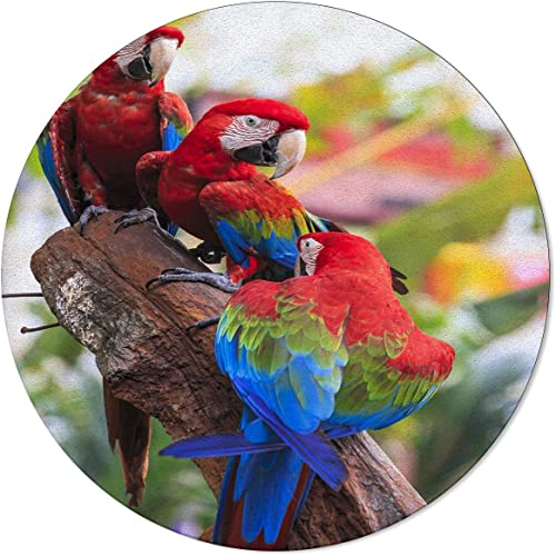 OneHoney Round Area Rugs 3ft,Macaw Bird Family on Branch Indoor Throw Runner Circle Rug Entryway Doormat Floor Carpet Pad Yoga Mat