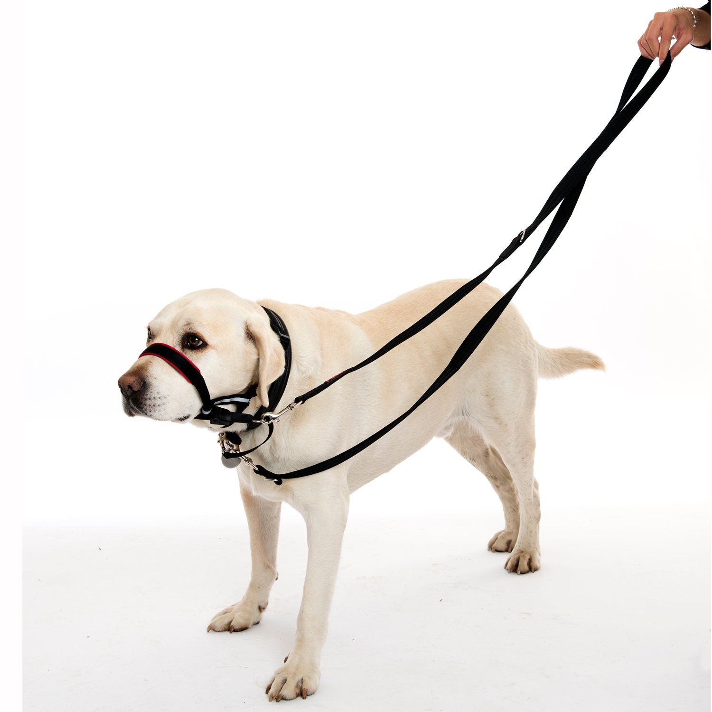 Black 6 6 Large Company of Animals Halti Training Lead