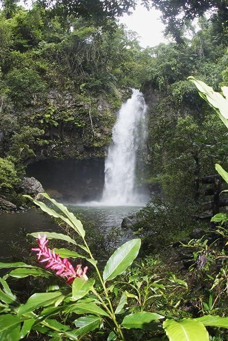 Amazon Com Posterazzi Fiji Taveuni Bouma National Heritage
