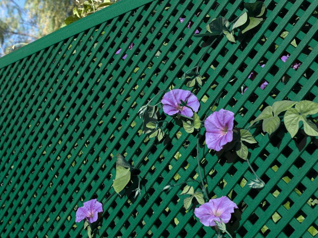 Catral Celosia Lop 1x2 Verde: Amazon.es: Jardín