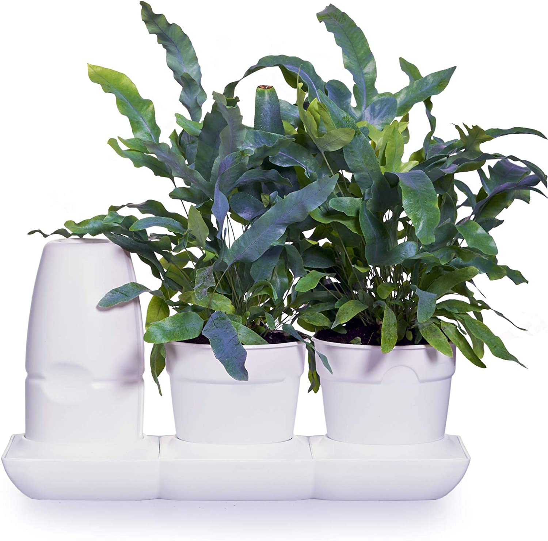 minigarden Basic S Pots, Kit Innovador para Inexpertos para un Cultivo Fácil, Sistema Automático de Riego y Nutrición, Ideal para Alféizares, Encimeras, Baldas y Mesas (Blanco)