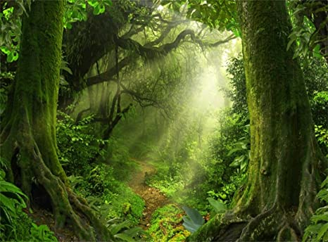 amazon com leowefowa 10x8ft jungle forest backdrop old trees green