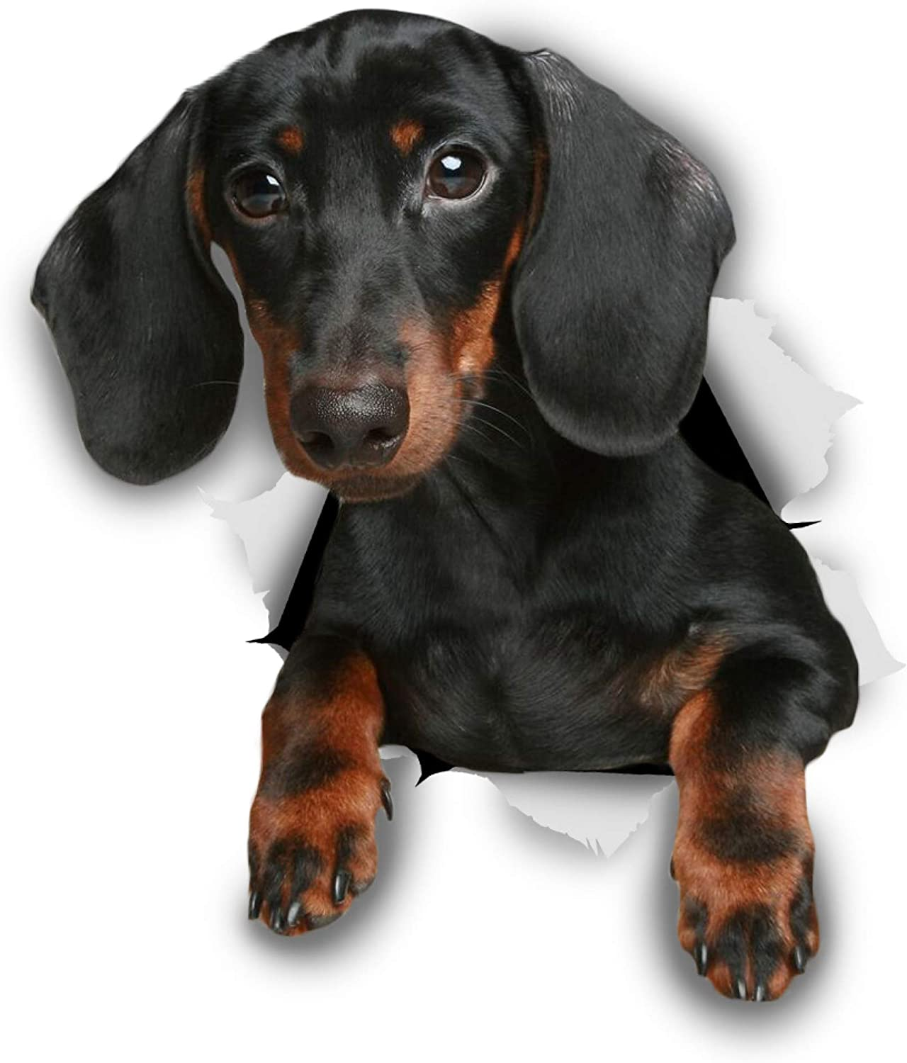 Winston & Bear 3D Dog Stickers - 2 Pack - Black Dachshund Sausage Dog Decals for Wall, Fridge, Toilet and More - Black and Brown Dachshund Decor - Retail Packaged Dachshund Stickers