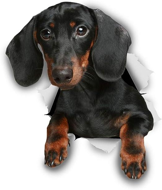 Winston & Bear Pegatinas 3D perro - 2 Pack - negro Dachshund para ...