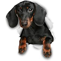 Winston & Bear 3D Dog Stickers - 2 Pack - Black Dachshund for Wall, Fridge, Toilet and More - Retail Packaged Dachshund…