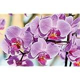 Orchidee FOTOMURALE - Orchidee fiori tappezzeria da parete- bei fiori quadro - XXL decorazione da parete by GREAT ART (210 x 140 cm)