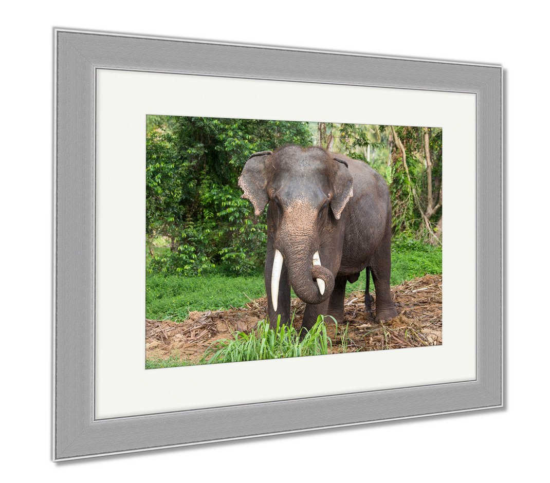 Ashley Framed Prints Thai Elephant In Jungle Island Koh Phangan Thailand, Wall Art Home Decoration, Color, 30x35 (frame size), Silver Frame, AG5257648