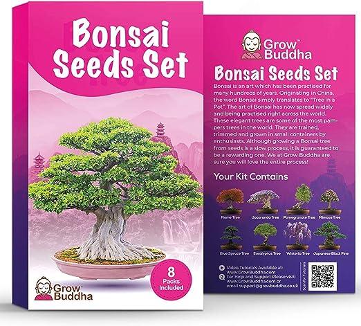Set de semillas de árbol de bonsái para regalo de - Cultiva tu propio árbol de bonsái fácilmente con nuestro set de 8 semillas de árbol de bonsái: Amazon.es: Jardín