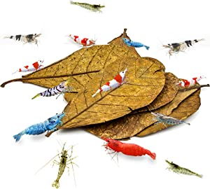 SunGrow Catappa Indian Almond Shrimp Leaves, Provide Shelter and Food, Additional Source of Nutrition, Perfect for Breeding and Hiding, Sun-Baked Catappa Leaves, A Must-Have for Shrimp Keepers