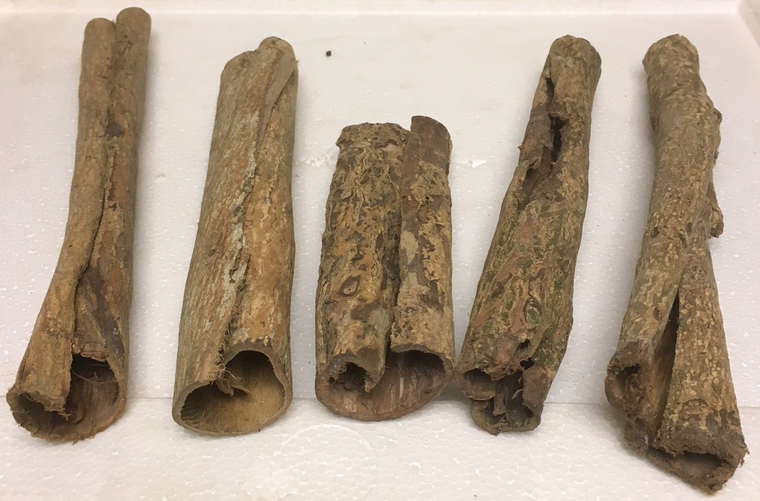 Diameter 3 cm x 12 cm Catappa Barks Cave//Tube - Catfish Lair Tubes Indian almond Tree Bark Tubes Caves Bonus Action