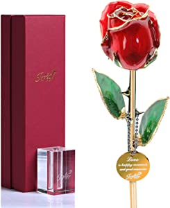 Gold Tipped Real Rose with Stand - Choice of Colors