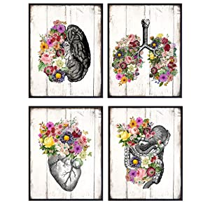 Shabby Chic Anatomy Wall Art Poster Set - 8X10 Rustic Pictures for Medical Clinic, Dr Office - Gift for Women, Woman, Wife, Her, Med Student, Physicians Assistant, Doctor, Nurse, PA - Unframed Decor