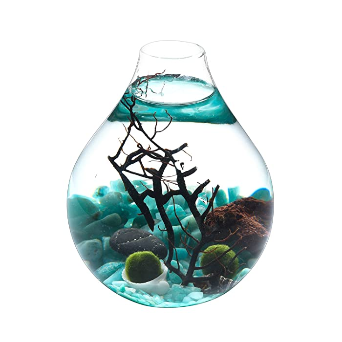 Fashion Table Aquarium - Live Moss Ball, Sea Fan, Amazonite Gravels, Seashell, Red Volcano Rock, Work Desk Decoration Indoor Decor