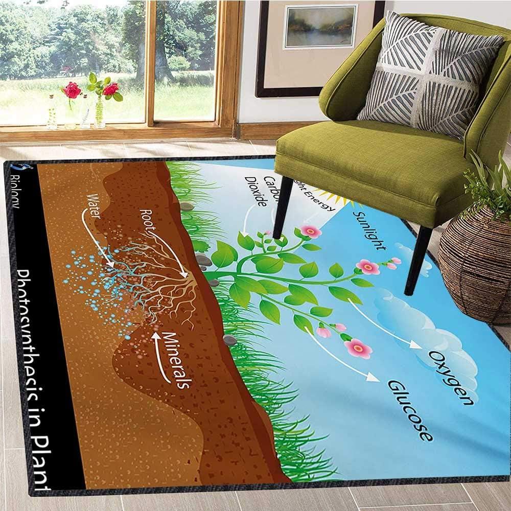 Tapete Educativo para Sala de Estar, fotosíntesis en el Diagrama de Plantas, biología, Agricultura botánica, Ambiente follaje, felpudos para Interior de 5 x 8 pies: Amazon.es: Hogar