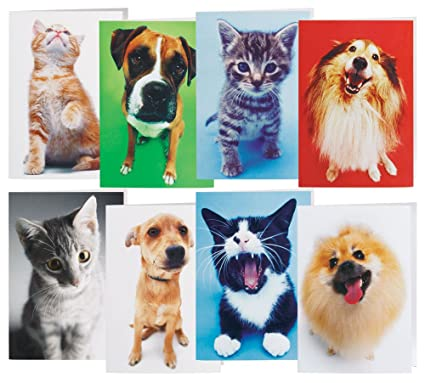 walterdrake dog and cat blank note card - Dog Greeting Cards