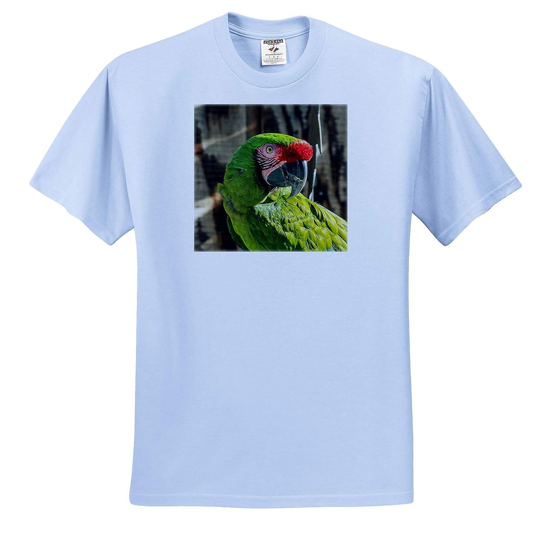 Adult T-Shirt XL Birds 3dRose Danita Delimont ts/_314729 Portrait of a Parrot