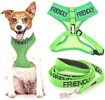 FRIENDLY (nudo como amigable para todos) Color Verde Anillo en D ...