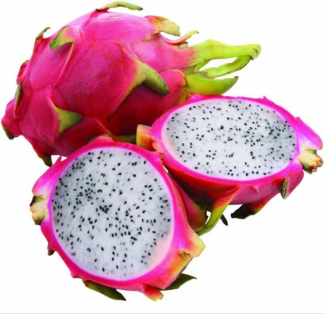 Ncient 10 Semillas de la Fruta de Dragón Semillas de Frutas Huerto Flores Raras Plantas Bonsai para Jardín Balcon Interior y Exteriores