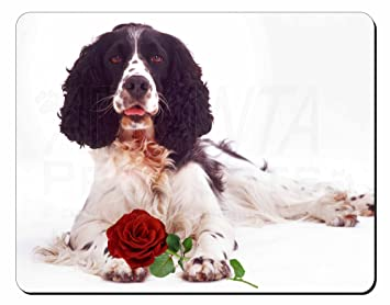 Springer spaniel xmas gifts for women