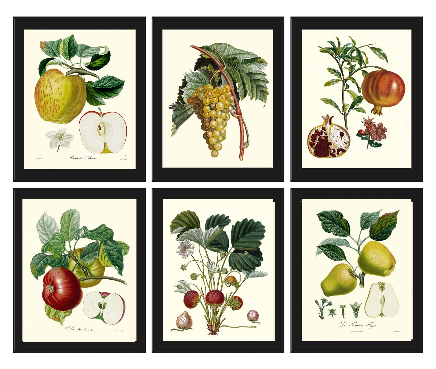 APPLES ILLUSTRATION FRUIT ART PRINT Home Kitchen Decor Antique Style Picture