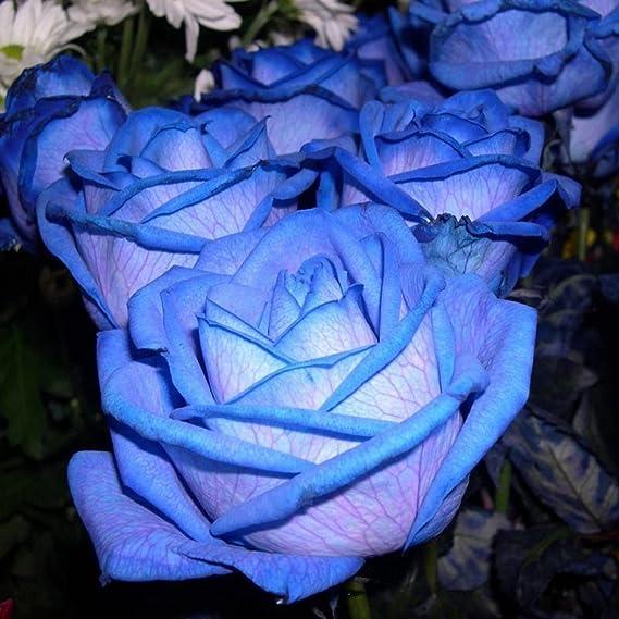 Seidenblumen 5 x Rose Edelrose schwarz   Kunstblumen