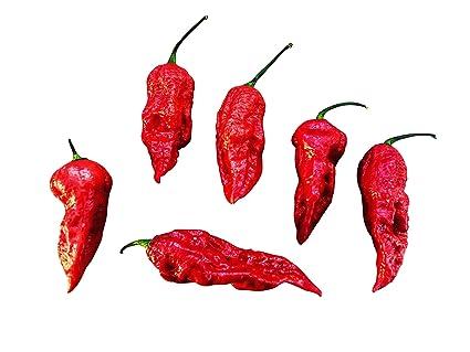 Habanero Red 20 Samen Eine der sch/ärfsten Chilis der Welt