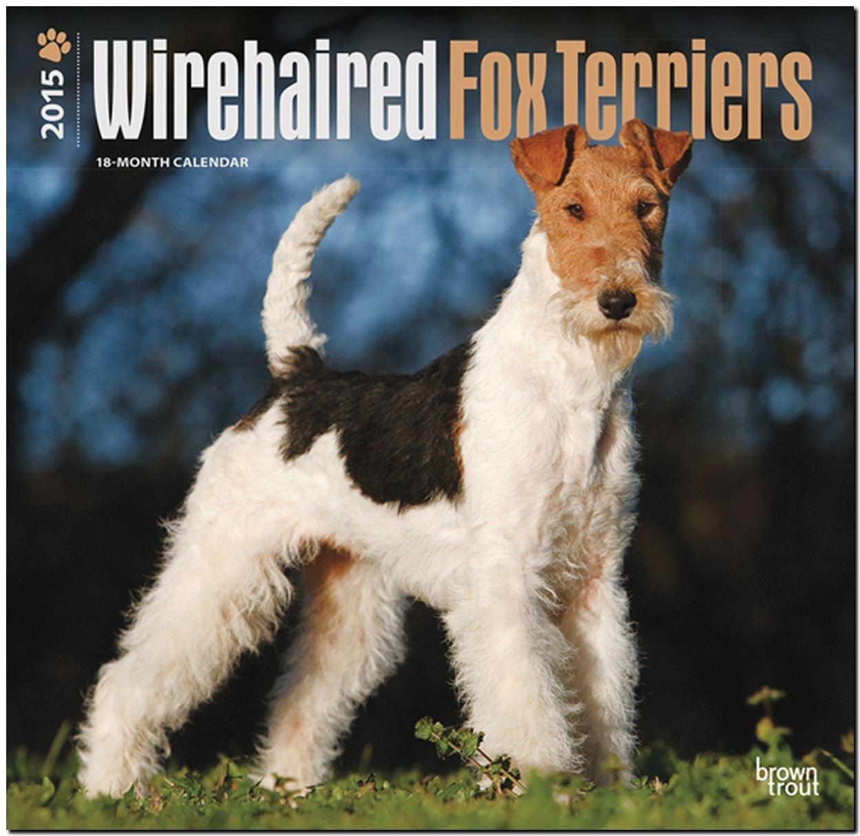 Fox Terriers 2015 - Foxterrier