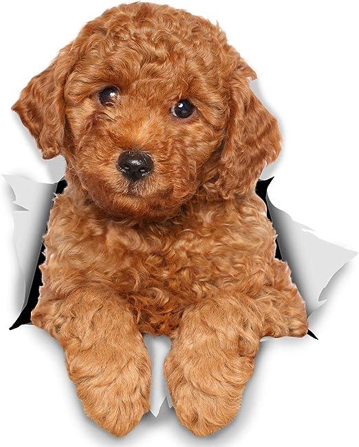 Winston & Bear Perro 3D pegatinas - Pack 2 - rojo Poodle para ...