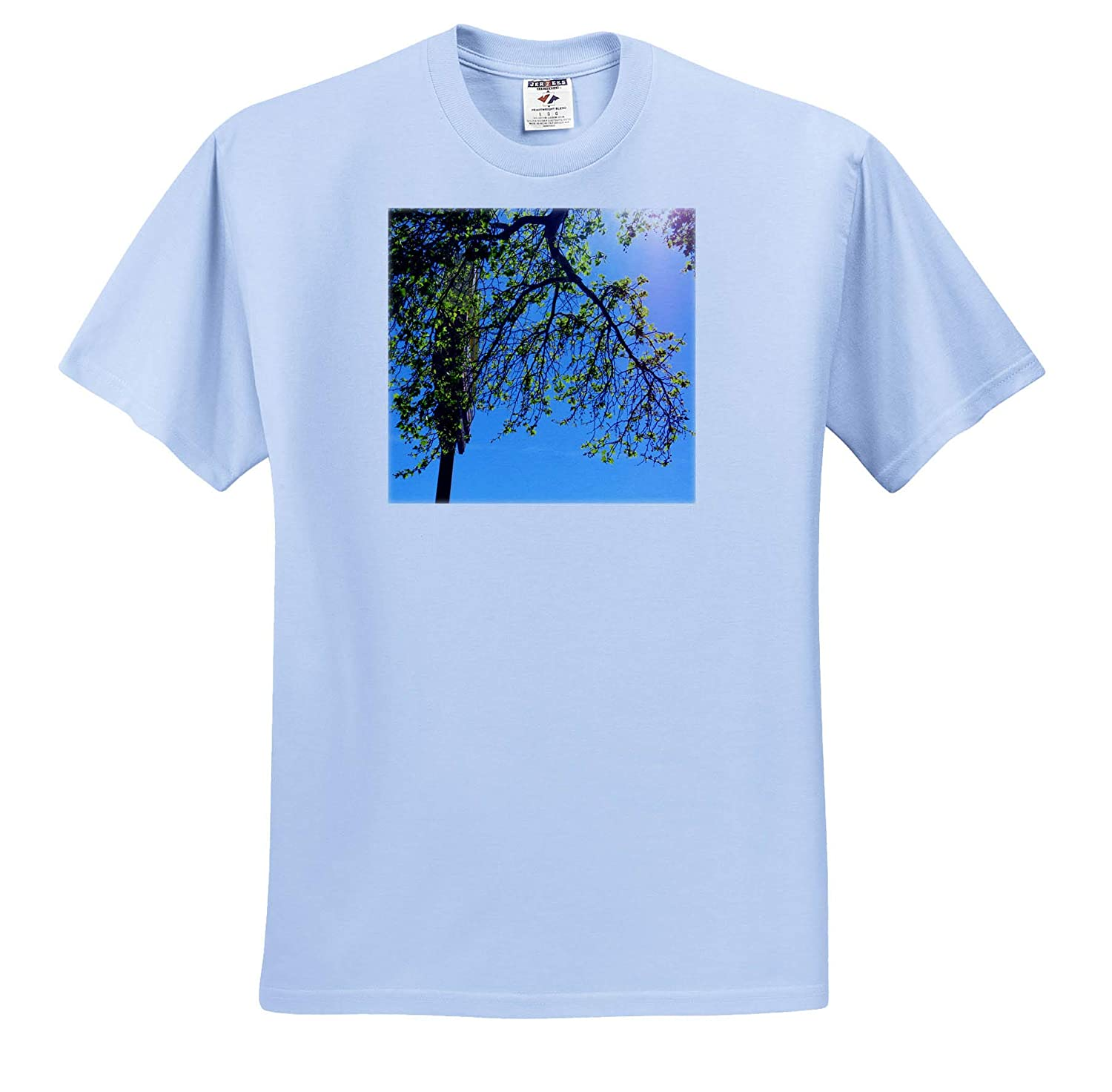 A Tree with Wispy Branches in The Sunlight on a Blue Sky T-Shirts 3dRose Jos Fauxtographee Tree Framing Sky with Sun