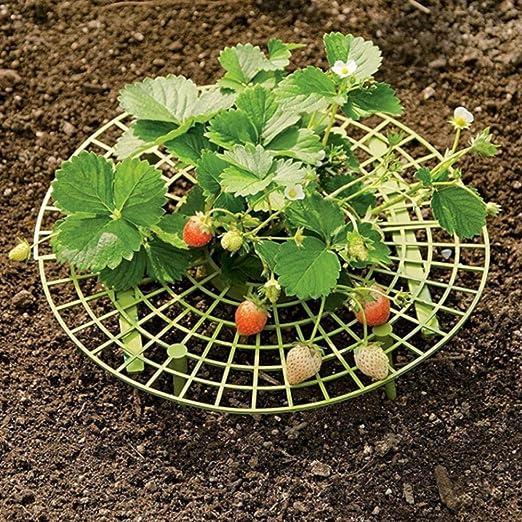 Todaytop 10 Piezas de Fresas para Plantas de Cultivo de Fresa ...