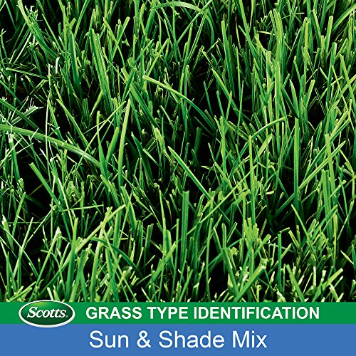 Scotts Sun and Shade Mix for Northern Lawns