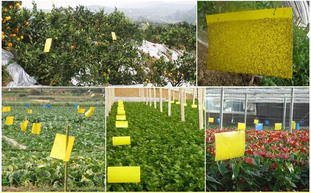 20PCS trampas adhesivas doble amarillas moscas jardín tablero ...