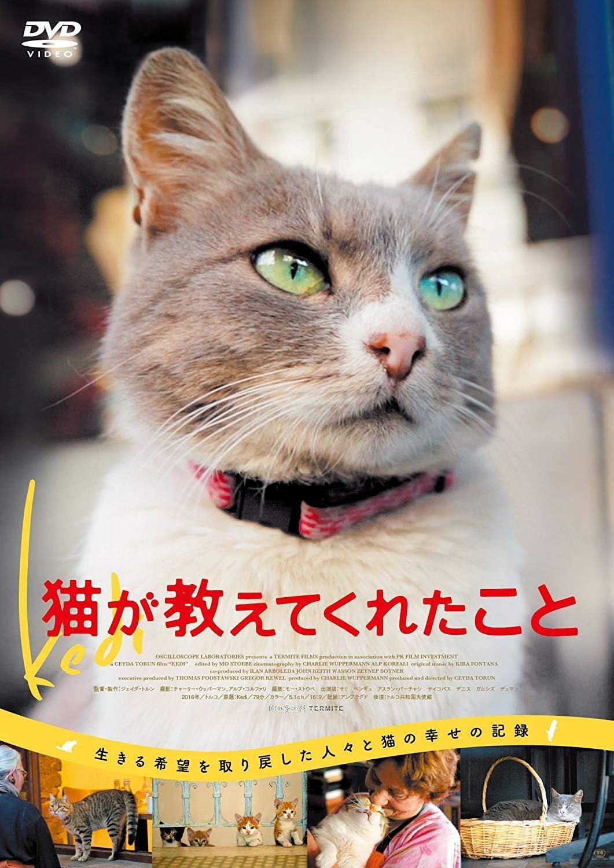 も 意味 も 杓子 猫