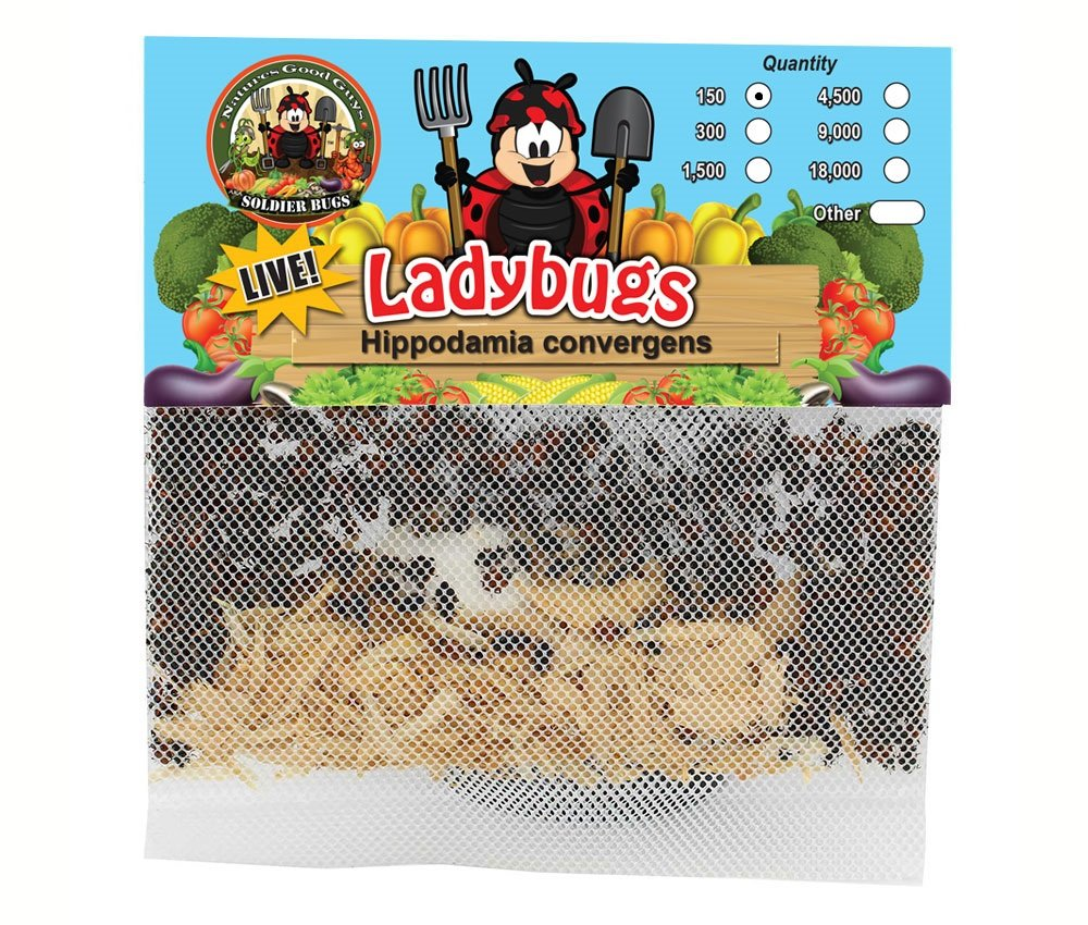 150 Live Ladybugs - Good Bugs - Ladybugs - Guaranteed Live Delivery! Bug Sales