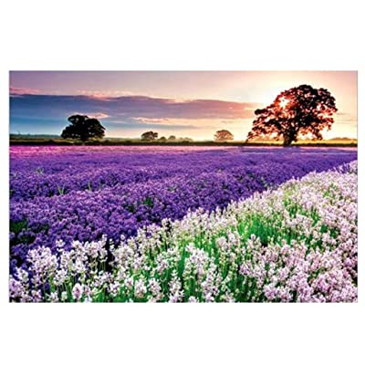 Yukuai Provence Lavender Jigsaw Puzzles 1000 Pieces for Adults Children's Puzzle Toy, Landscape Lavender Jigsaw Puzzle, DIY Collectibles Modern Home Decoration 27.56 x 19.69 inch: Toys & Games