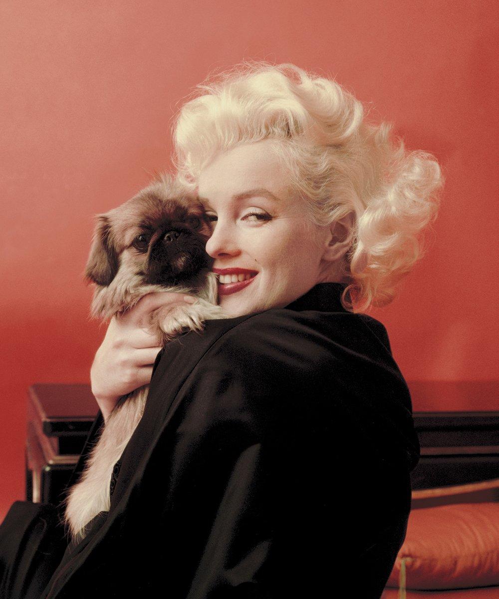 "Royal Plush Extra Heavy Queen Size Mink Blanket - Marilyn Monroe Cuddling Puppy (79"" x 85"")"