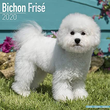 Bichon Frise Calendar 2020 Dog Breed Calendar Wall Calendar 2019 2020
