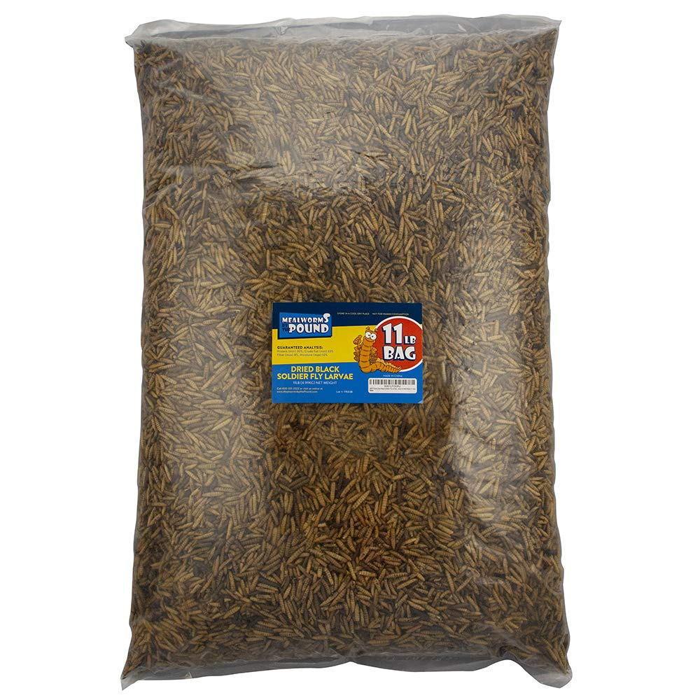 Mealworms by the Pound MBTP Bulk Dried Black Soldier Fly Larvae - Treats for Chickens & Wild Birds (11 Lbs) by Mealworms by the Pound