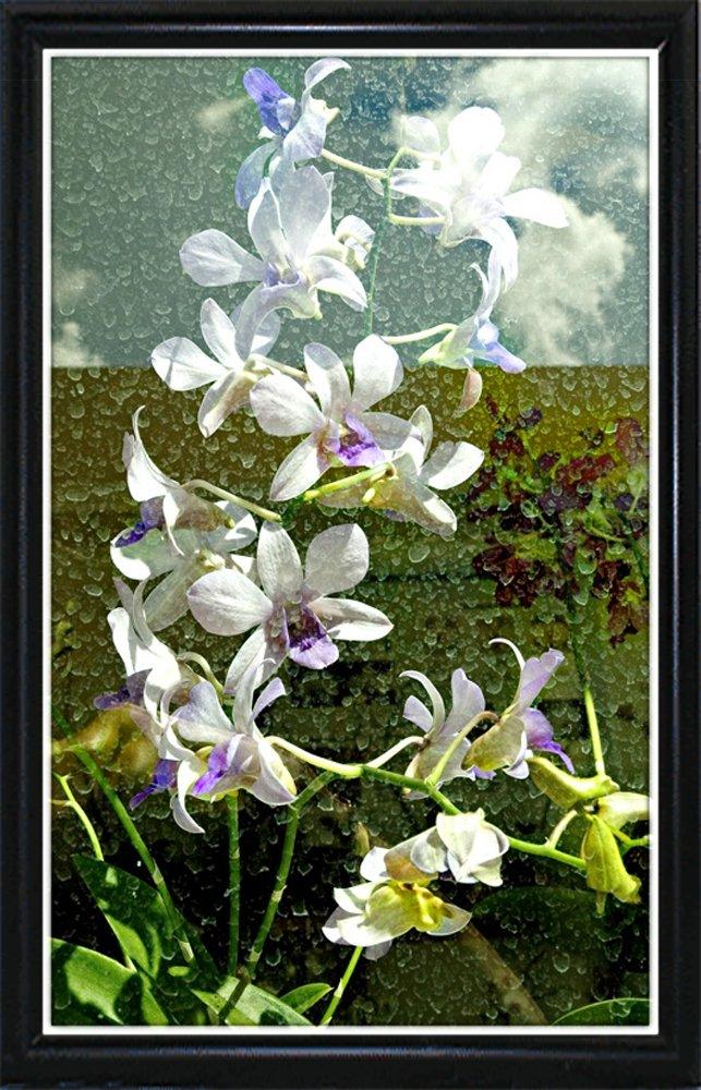 Through The Window-HARFLO59770 Print 24''x15'' by Harold Silverman - Flowers in a Flat Black Metal Frame